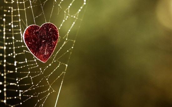 red-hearts-caught-in-spider-web-wide-hd-wallpaper