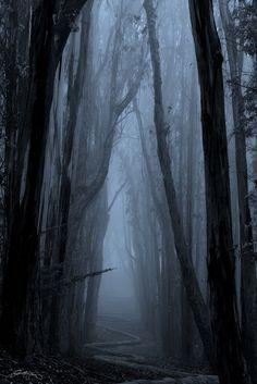 Twisted Path by BuddyMonday